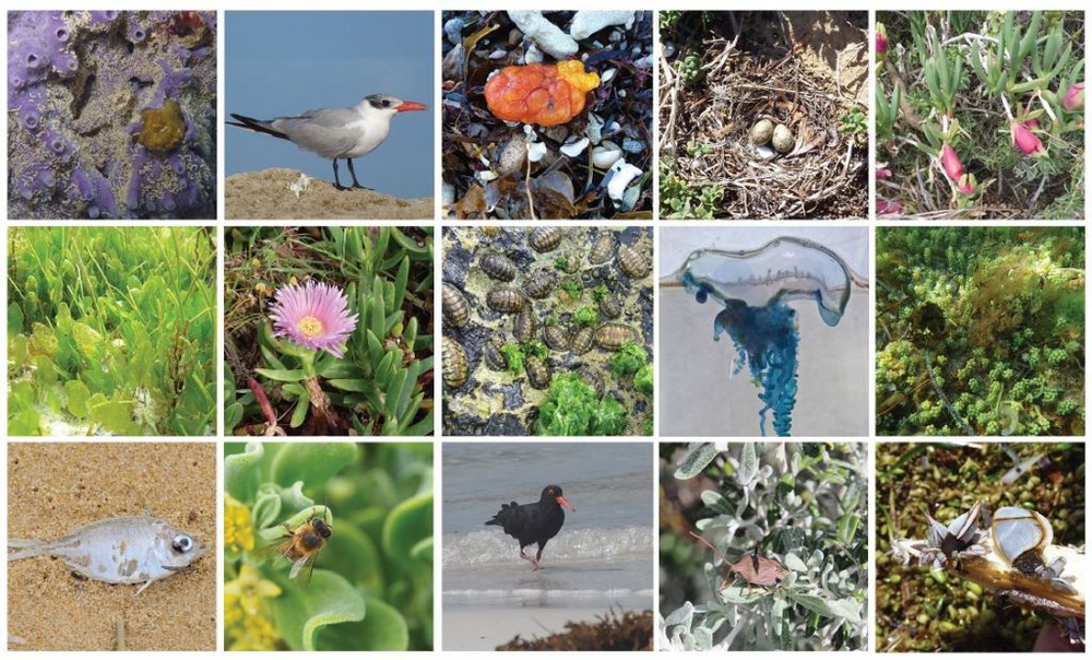 Community Coastal Biodiversity Survey