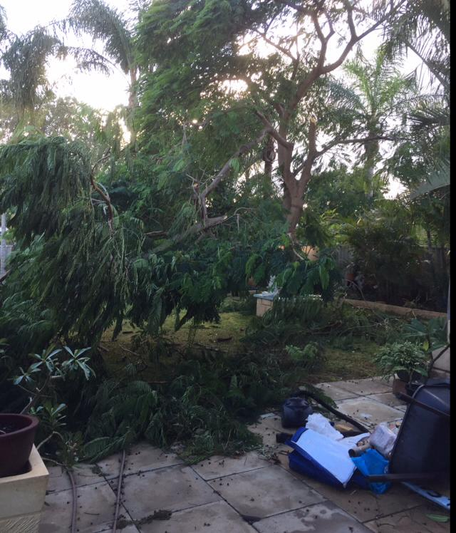 We had a mini cyclone on top of that in sunset lost half our Poinciana tree - Beth