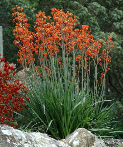 4 low maintenance plants that will look great in any for Low maintenance year round plants