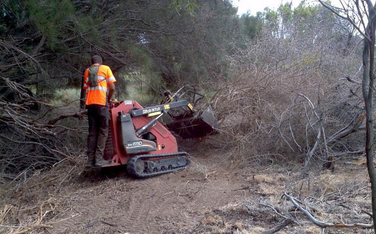 Safe removal of boxthorn using a skid steer loader.