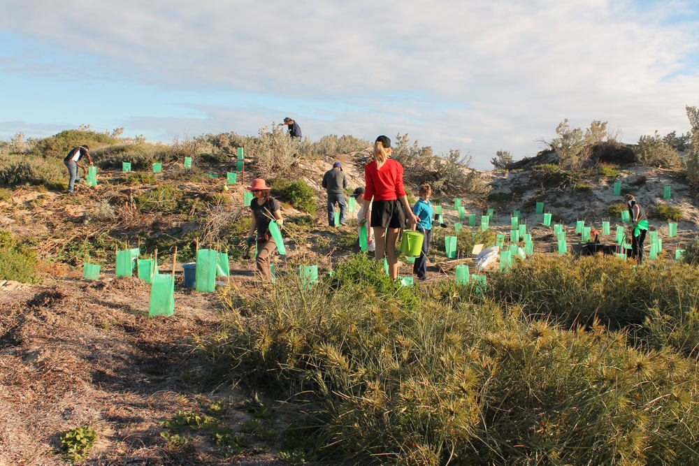 Be a part of the green transformation by joining in upcoming community tree planting events.