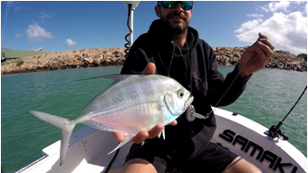DAMO WITH A LONG REACH TREVALLY