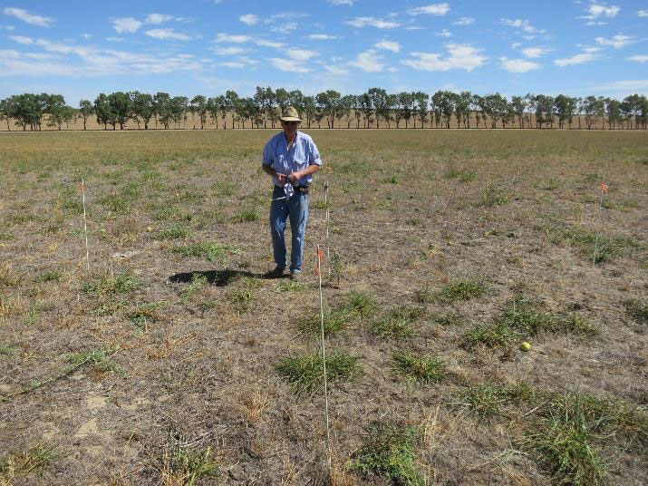 Producer Grant Bain marking out his demonstration site for Ever Green project. Photo Credit: Phil Barrett-Lennard, agVivo
