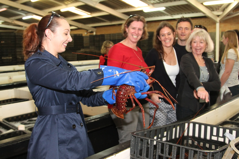 Cruise ship executives get up close and personal with Rock Lobsters at the Fisherman's Co-op Crayfish Factory.