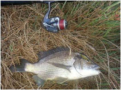 DANIAL WITH ANOTHER SOLID BREAM WITH THE STRADA VILLIAN-55