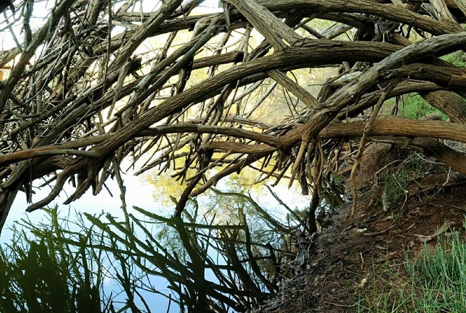 chapman river 2.jpg