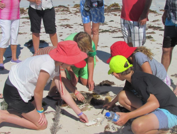 Sorting through beach wrack on Geraldton's coast.