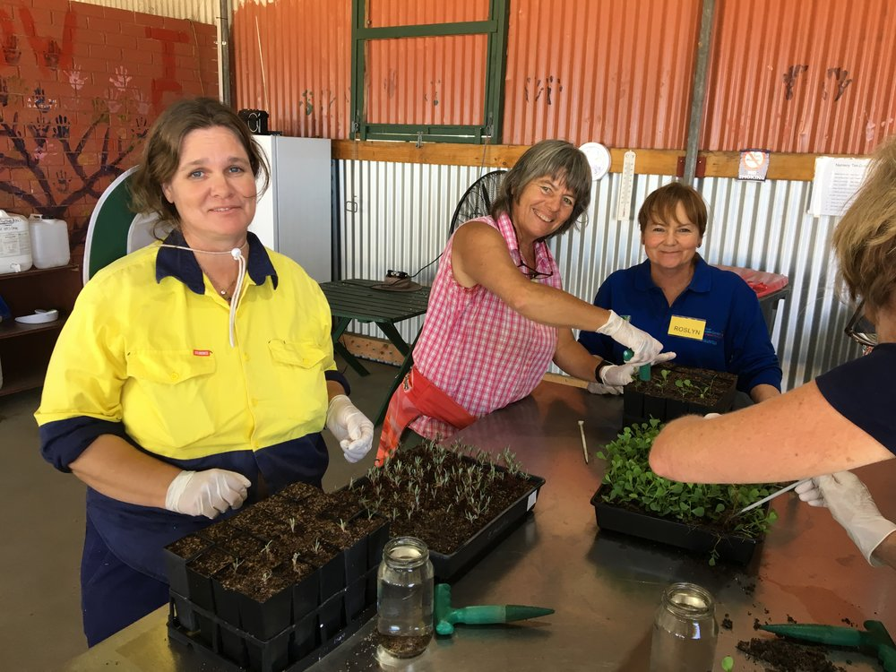 Community Nursery participants (from left) Kyle Cleminson, Anna Beyer and Roslyn Kelly use skills learned at a propagation workshop to prick out and pot on seedlings.