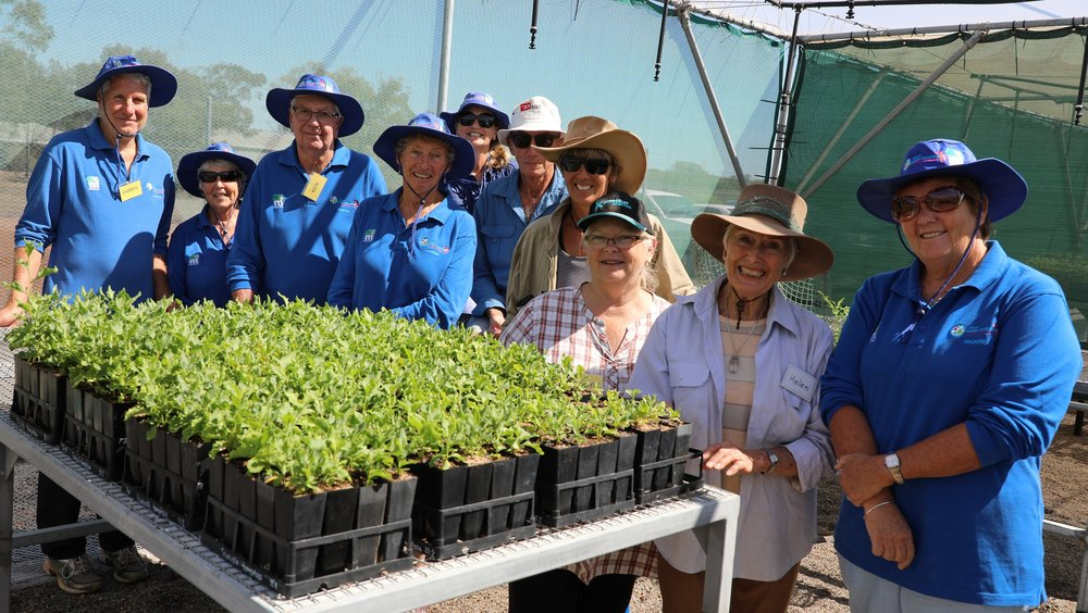 Community Nursery Volunteers standing proud with the Scaevola seedlings they have successfully grown for the first time.