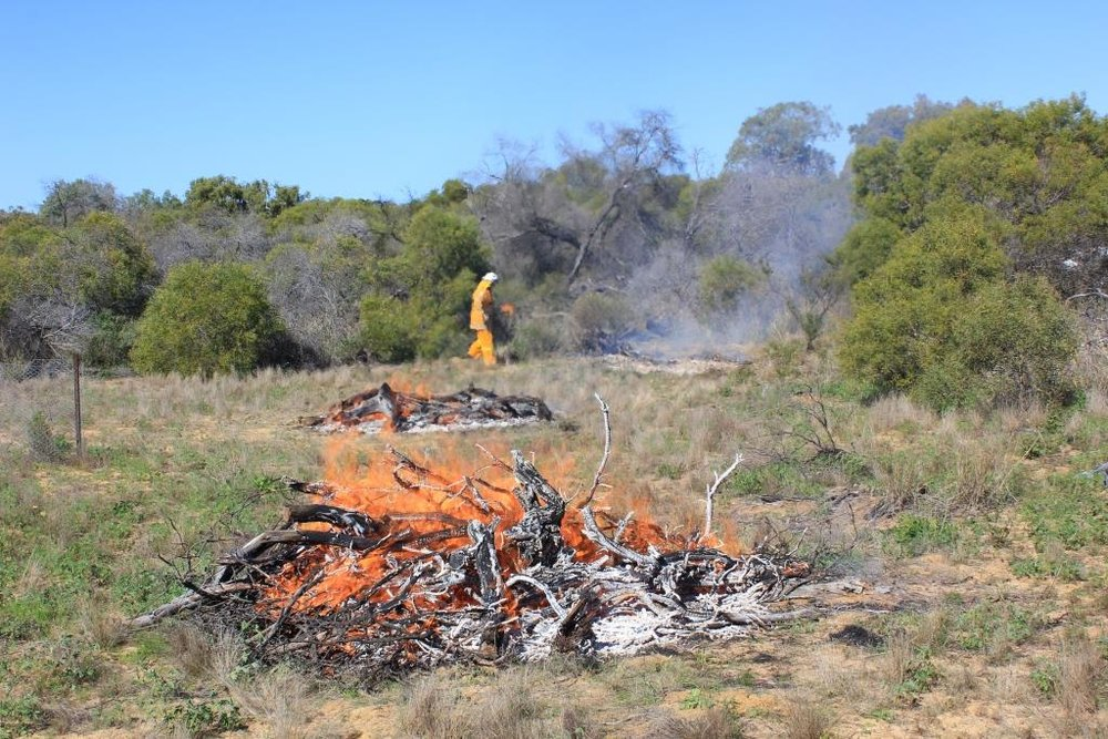 Biodiversity burn at Byne Park early in 2017.