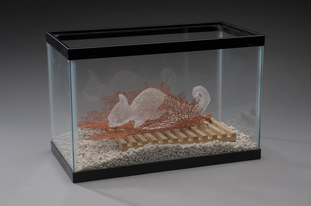 Last Sea Horse