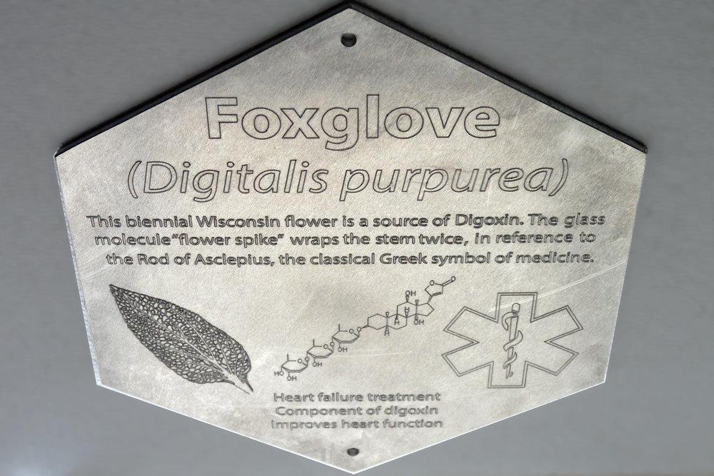 NA Plaque 6 foxglove.jpg