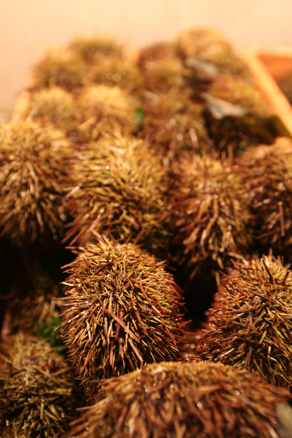 Chile-sear-urchins.jpg