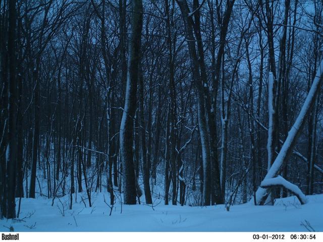 01jan2012forest6.jpg