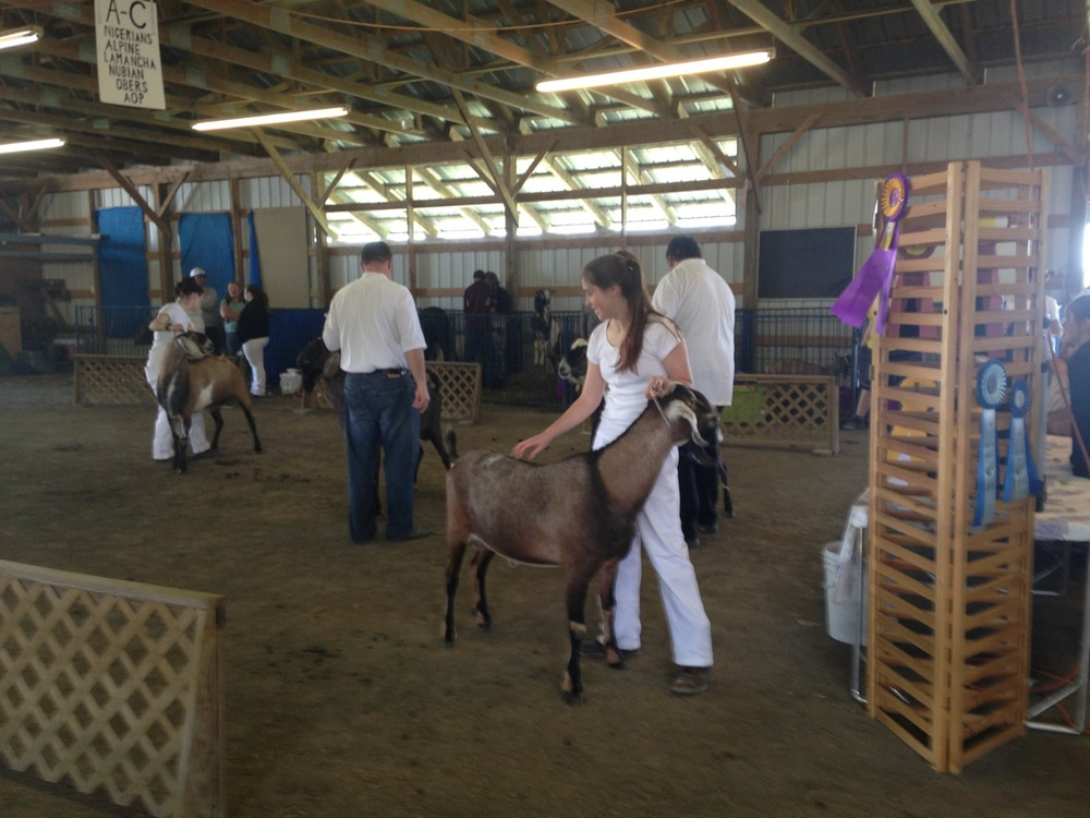 Autumn showing Cool to 1st place in the 1st ring