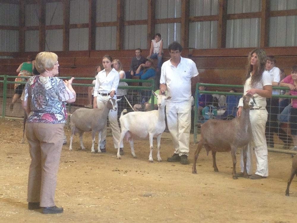 Autumn and Alien standing in Best Doe in Show lineup for Ring 2