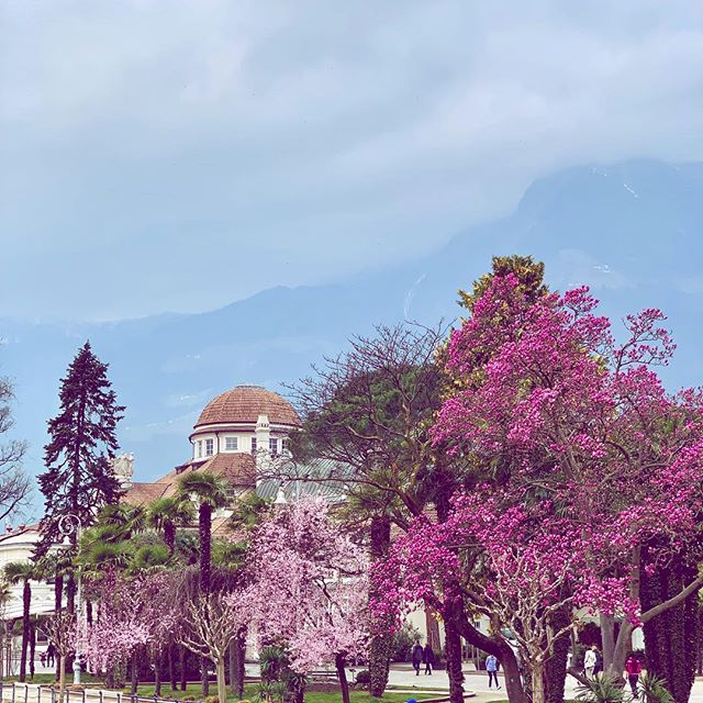 It's a Mary Poppins kind of a day but flowers appear earlier this year making Merano magic 🌸 • • • #flowers #blumen #fiori #spring #frühling #primavera #blossom #magnolia #blüte #magic #springbreak #derfrühlingkommt #picoftheday #sunday @visitmerano @visitsouthtyrol
