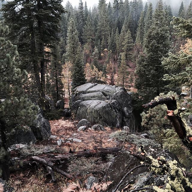 High Sierras trail romp. #outside #outdoorlife #getoutside #4x4 #eliteforager