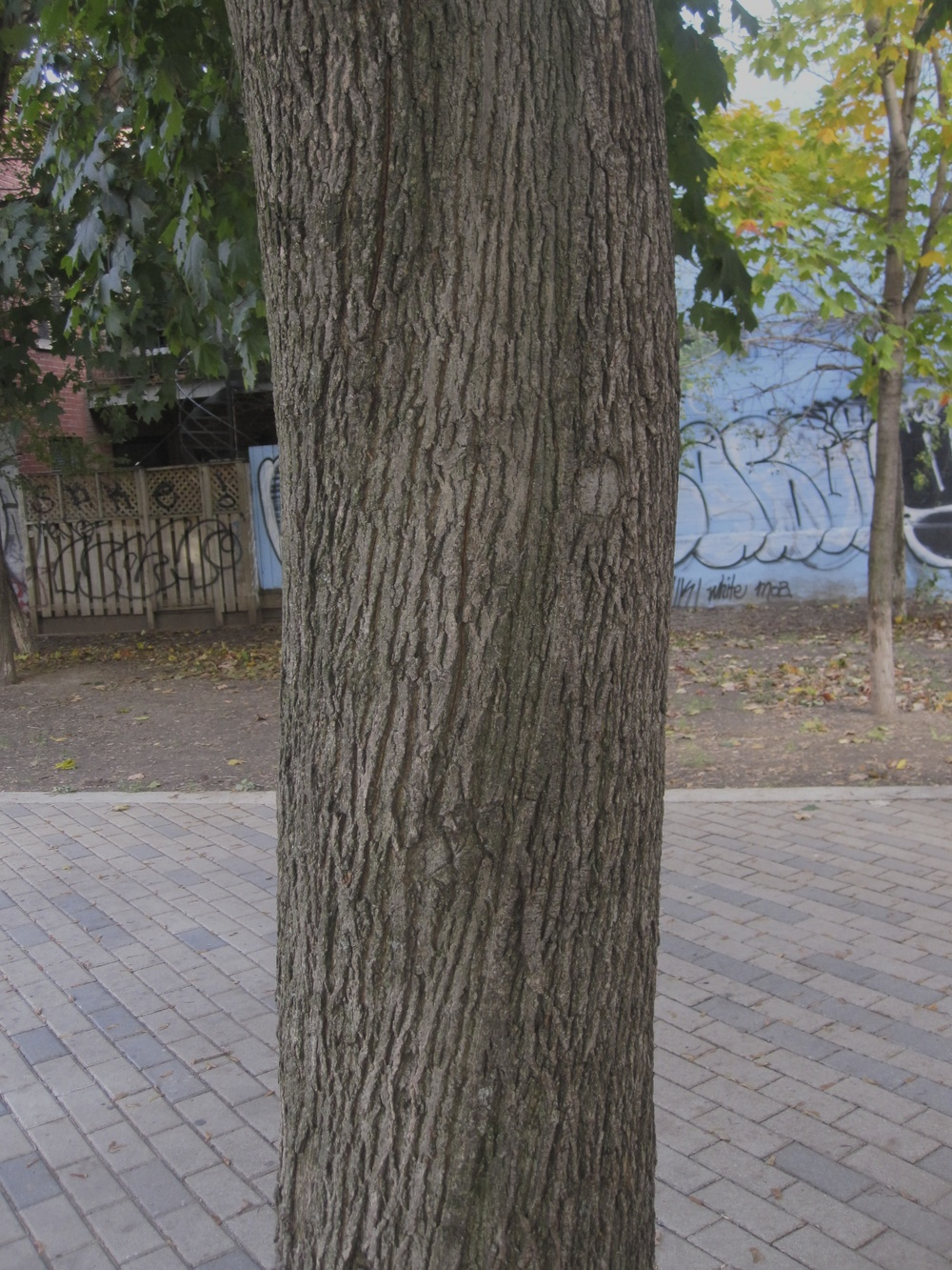 I May Have Put an Artwork on the Back of this Tree-Trunk © 2012 Maksymilian Kapelański
