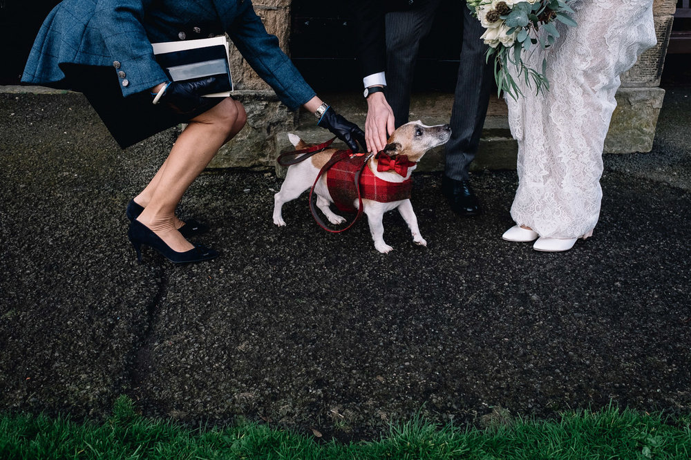 terrier wears tartan coat on winter wedding day