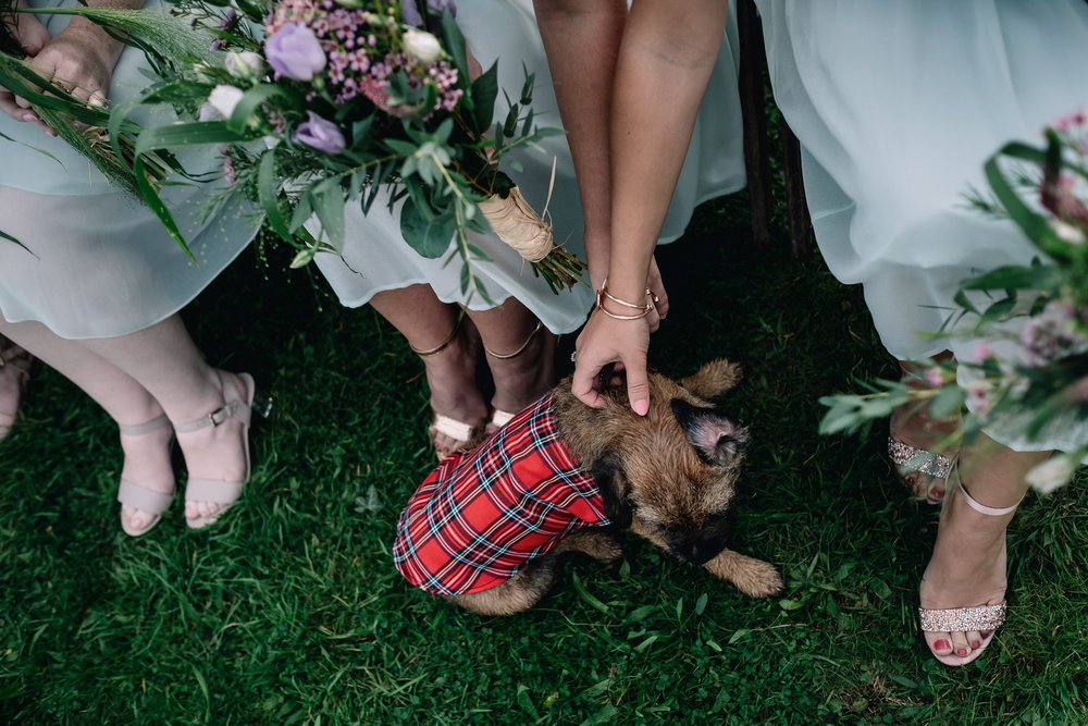 011-alternative-wedding-photographer-dog.jpg