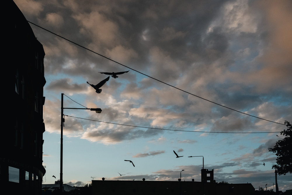 Birds are flying in the sky at sunset in Glasgow.