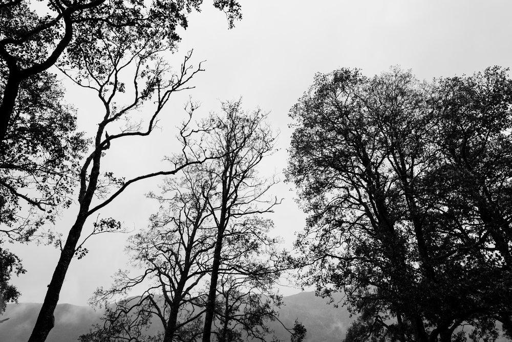 18-trees.JPG