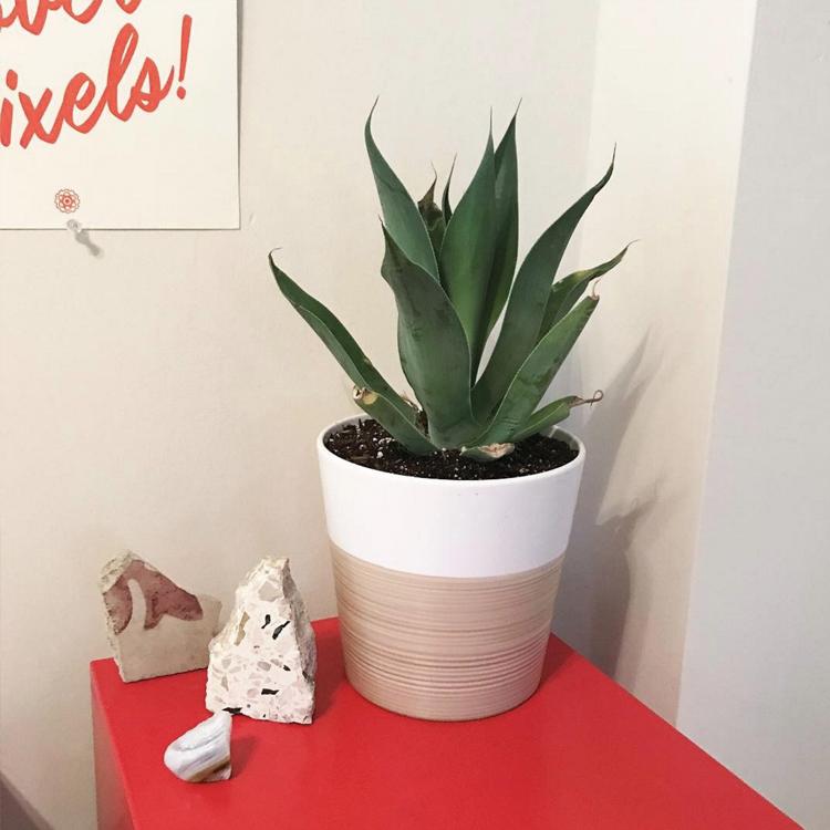new plant