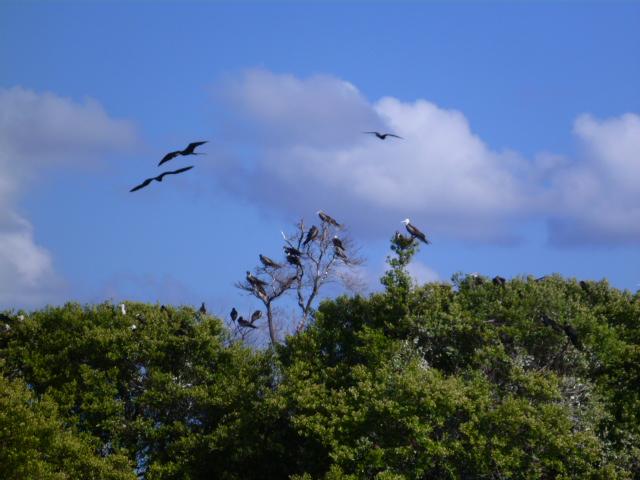 birdkey