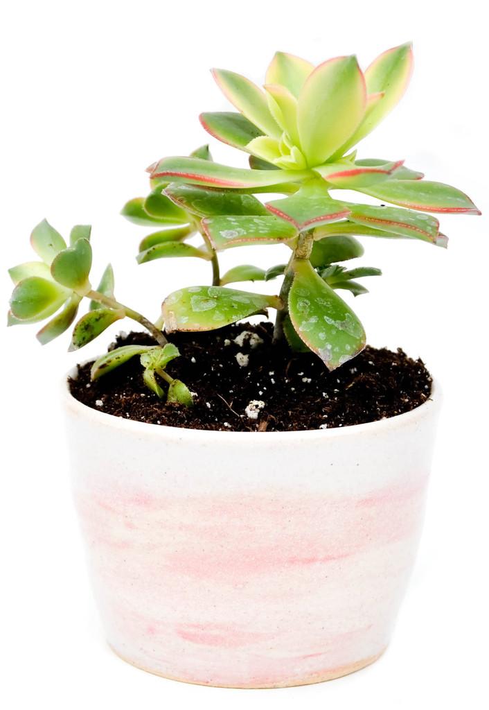 cherry_blossom_pebble_planter_1024x1024.jpg