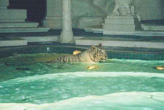 tigerbath.jpg