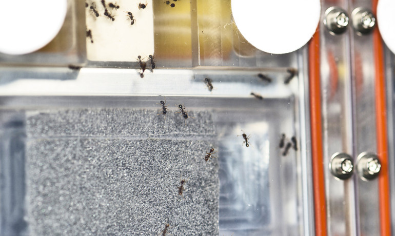 The ant experiment currently on board the International Space Station. (Image credit: NASA)