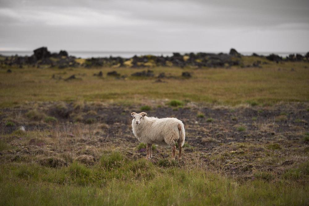 Iceland 2018-0005.jpg