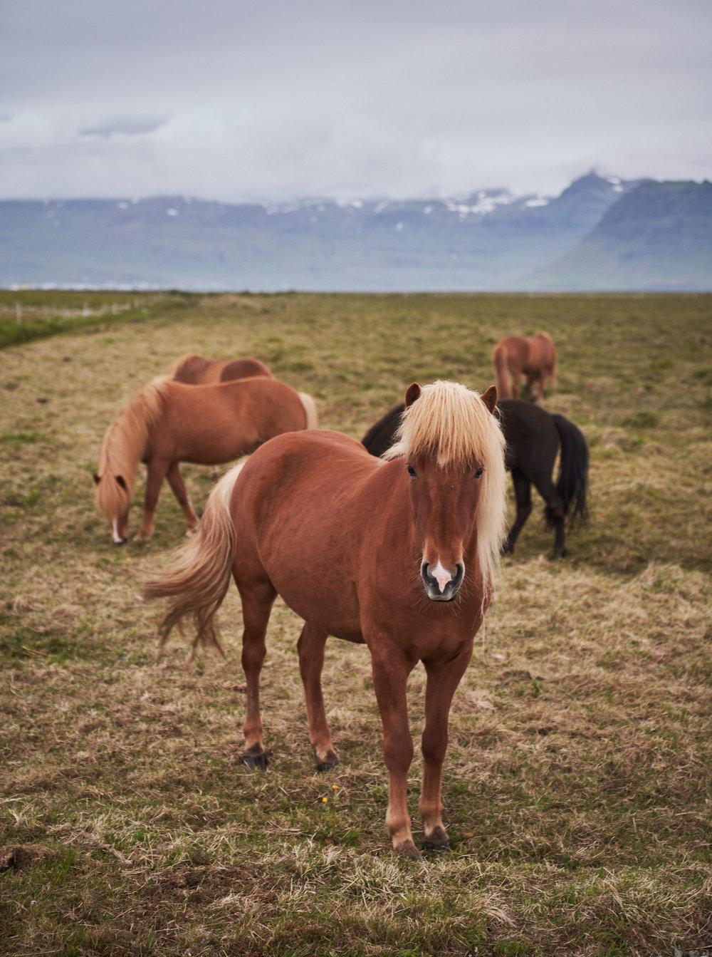 Iceland 2018-0015.jpg