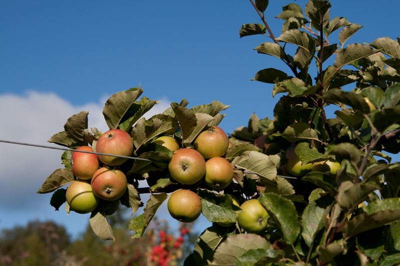 Westcott Bay Orchards on San Juan Island.