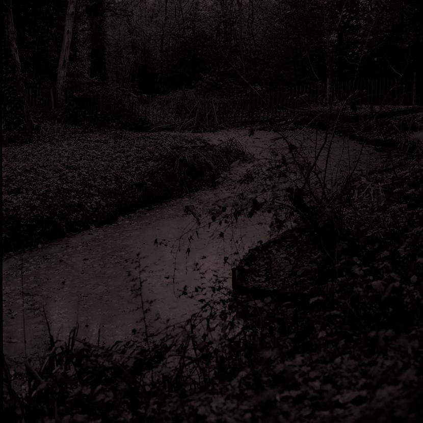 Forest4.jpg