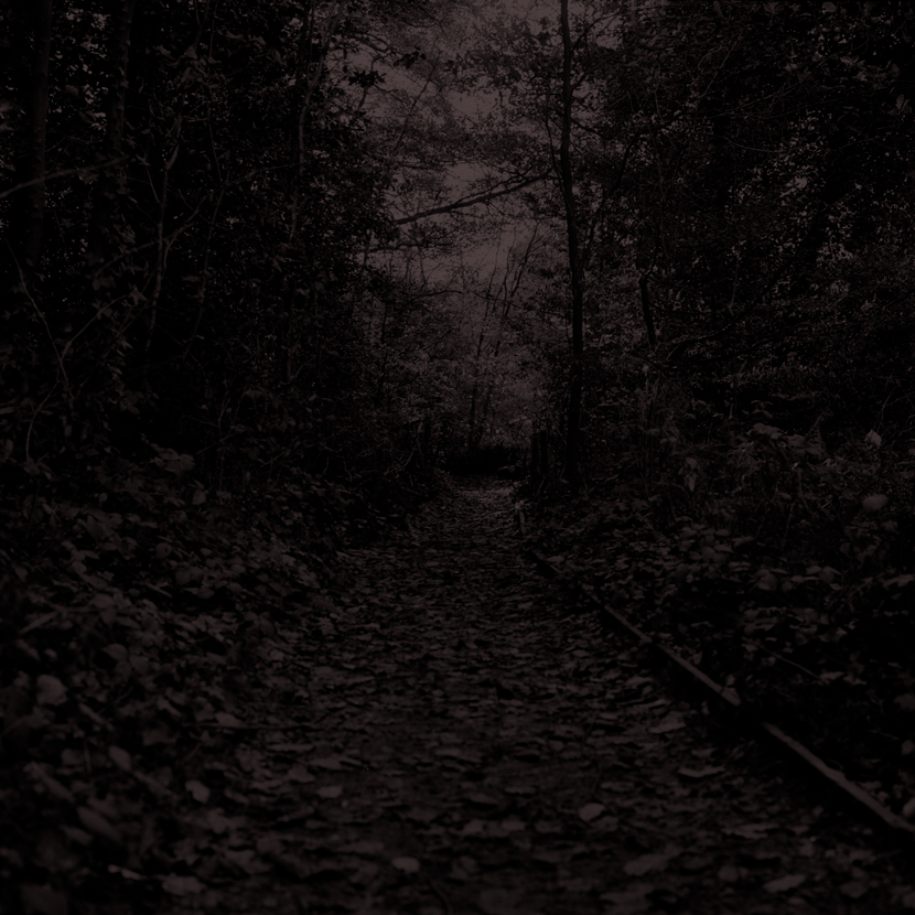 Forest06.jpg