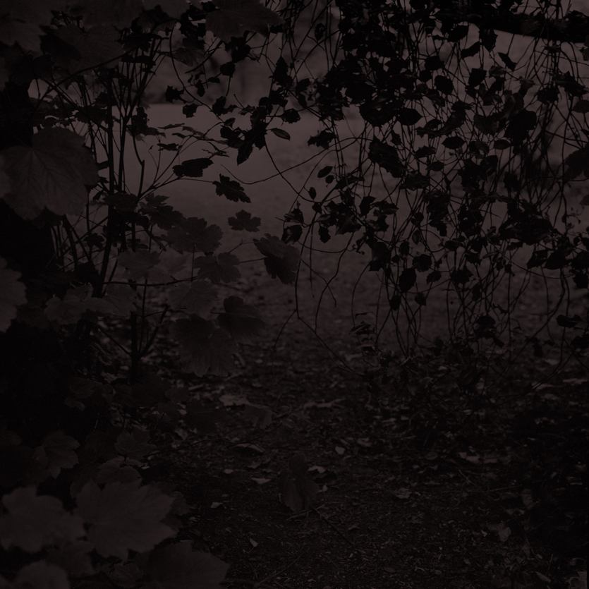 Forest15.jpg