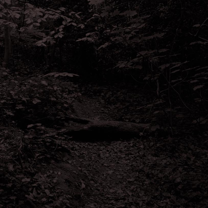 Forest17.jpg
