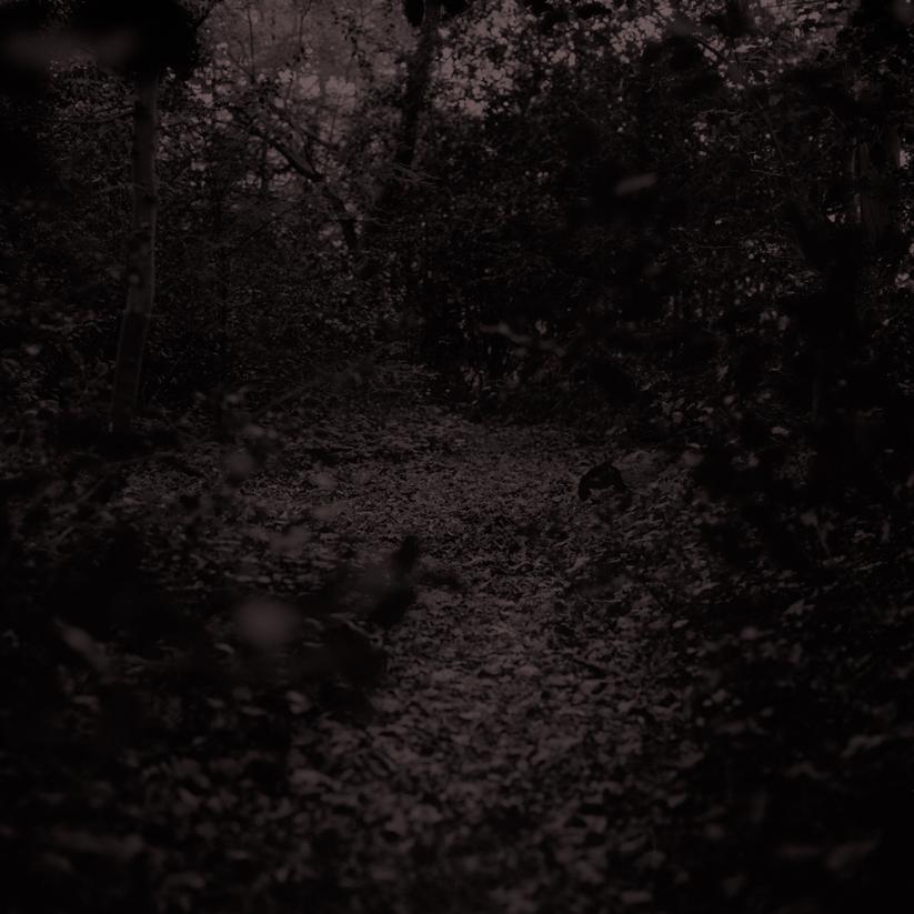 Forest16.jpg
