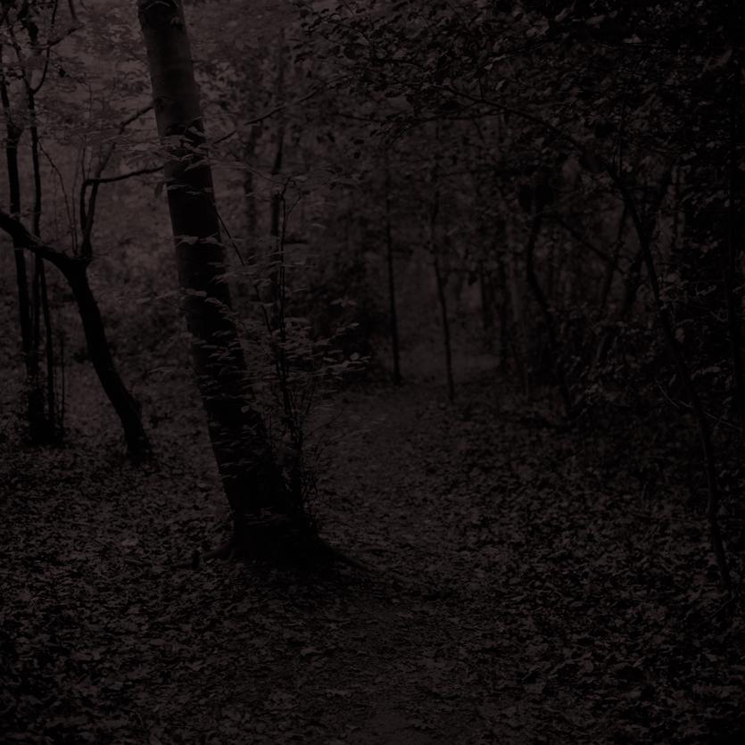 Forest18.jpg