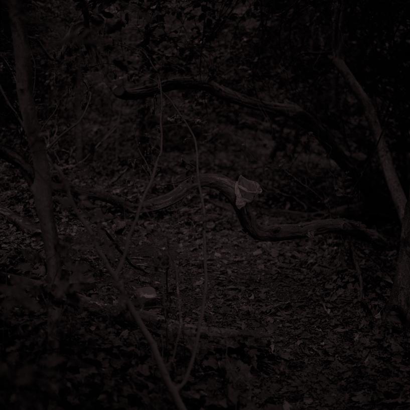 Forest23.jpg