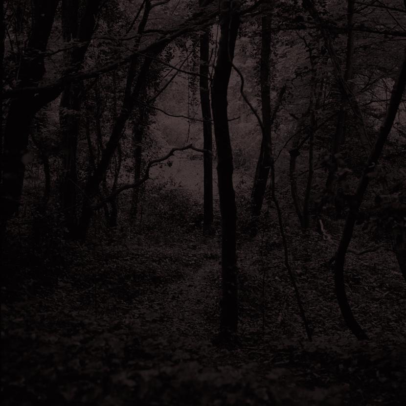 Forest21.jpg