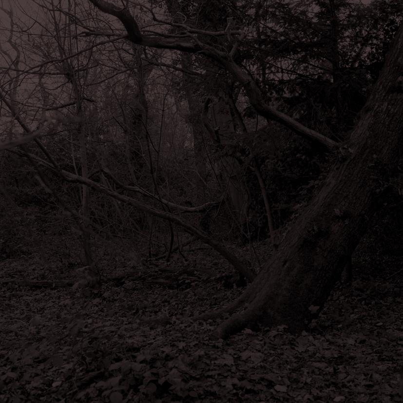 Forest24.jpg