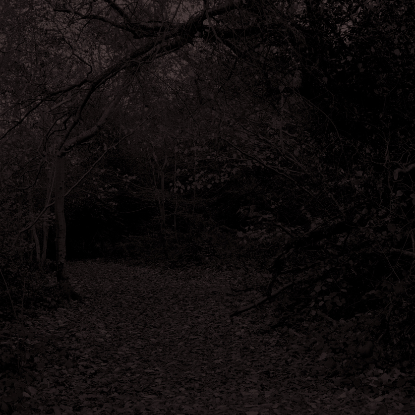 Forest25.jpg