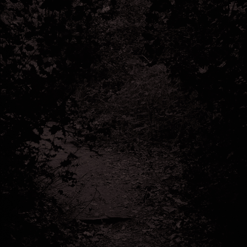 Forest26.jpg