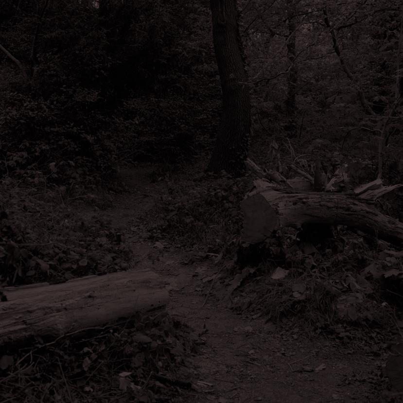 Forest28.jpg