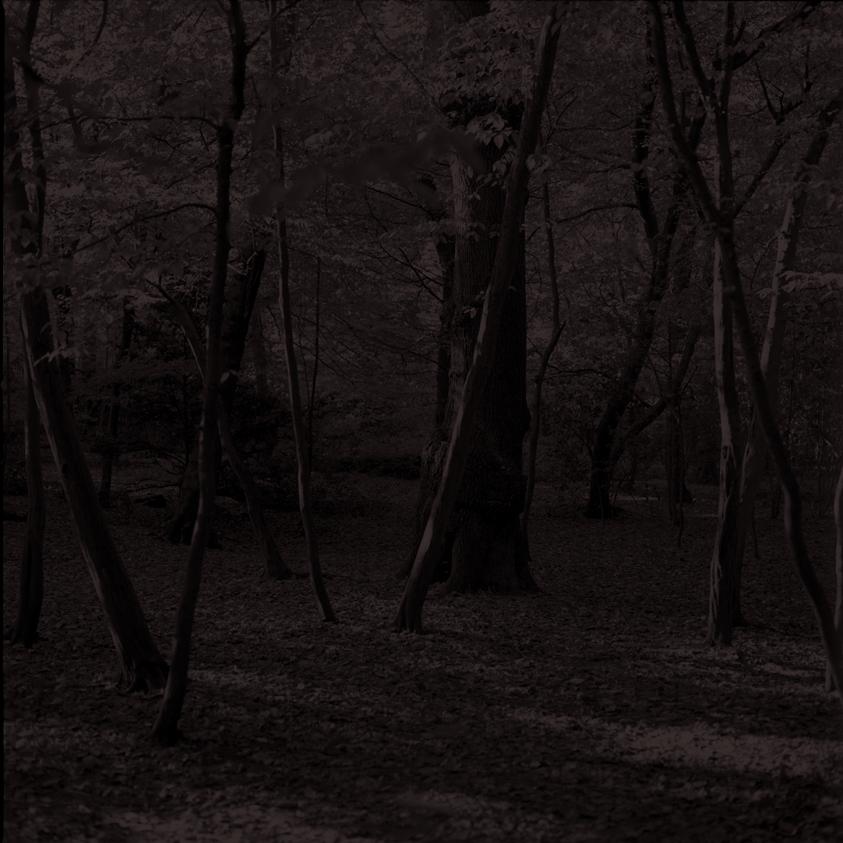 Forest35.jpg