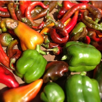 Are these peppers and other nightshades making us unhealthy?