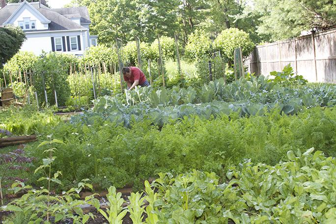 Bernard tending his vegetables.jpg